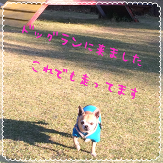 IMG_2545.PNG